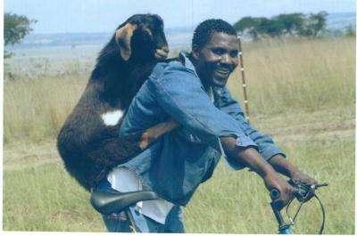 goat_011.jpg